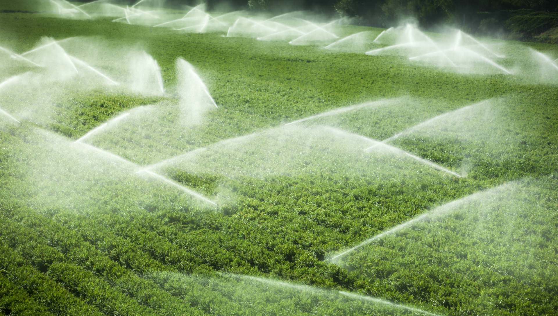 image of irrigation of field
