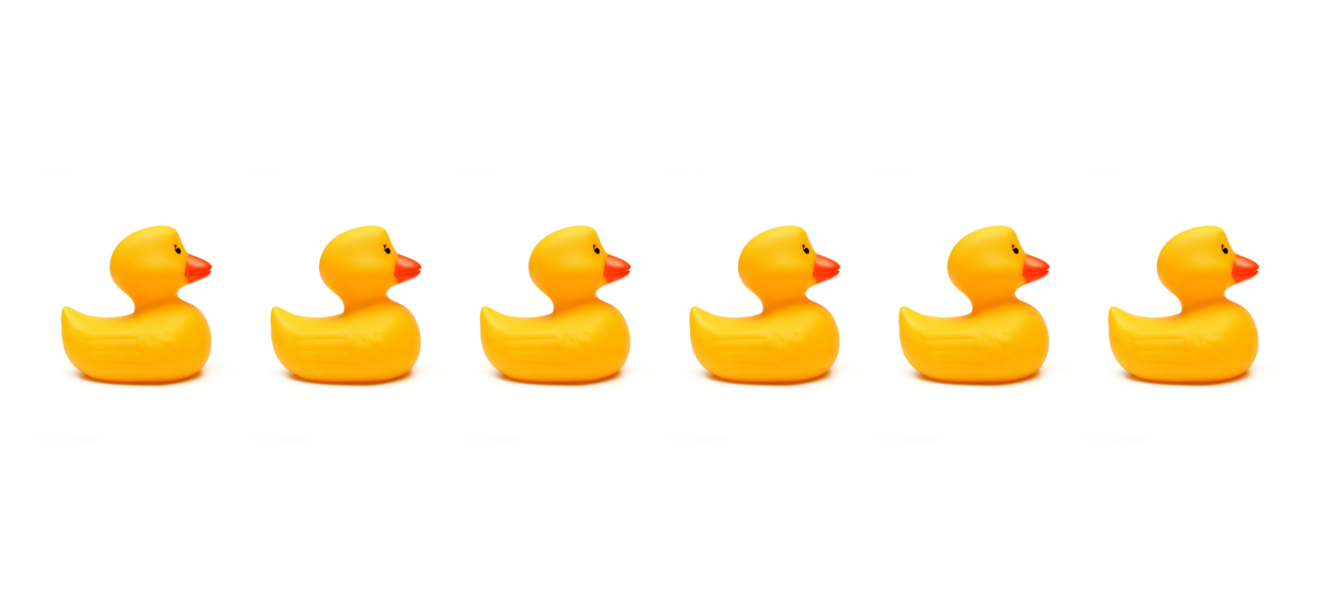 Rubber ducks in line