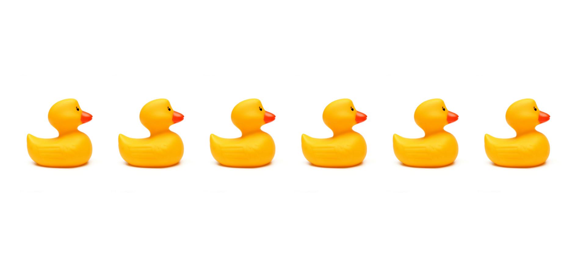 Rubber ducks in line
