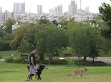 A man with dogs in the park
