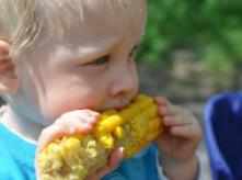 image of toddler eating corn