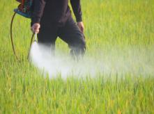 Green_field_sprayed_with_pesticide