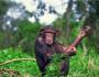 News_Monkey
