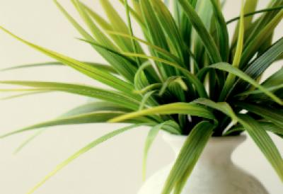 A Plant indoors